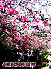 名護さくら祭り2006