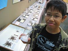 沖縄市郷土博物館のクモ展